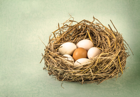 twigs nest with the white egg and one of different or unique Zdjęcie Seryjne