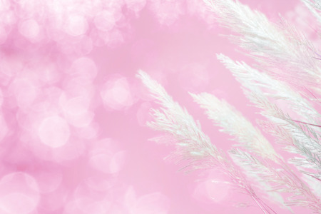 softness: abstract soft focus of pink lighting softness Feather Grass background