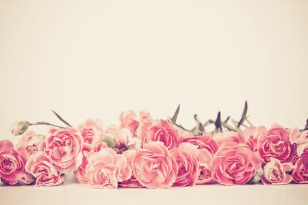 テキスト領域で白い背景にカーネーションの花を咲き美しい