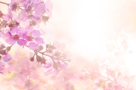 abstract soft sweet pink flower background from Plumeria frangipani flowers Stock fotó