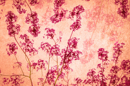 flamboyant: the Flam-boyant flower background Stock Photo