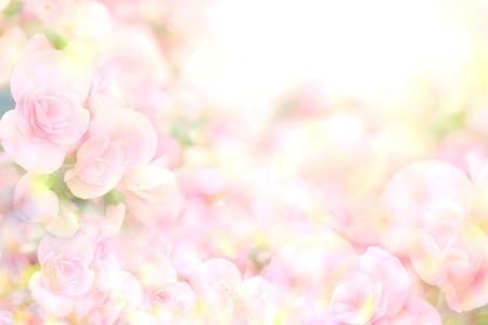 ベゴニアの花から抽象的な柔らかい甘いピンクの花背景