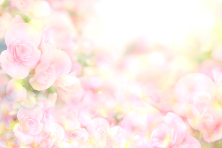 abstract soft sweet pink flower background from begonia flowers Archivio Fotografico