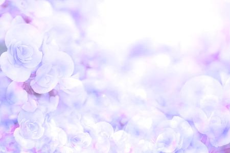 ベゴニアの花から抽象的な柔らかい甘い青紫色花背景 写真素材