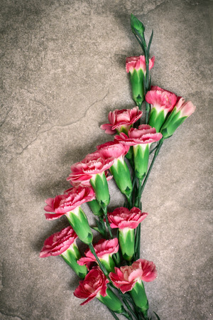 red stone: Fresh pink carnation flower on stone plate background Stock Photo