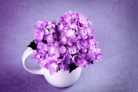 selective focus of the sweet purple hydrangea flowers in white vase in still life vintage style