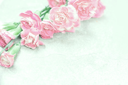 abstract soft sweet pink flower background from the Carnation flowers Reklamní fotografie