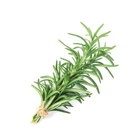 fresh green Rosemary on white background