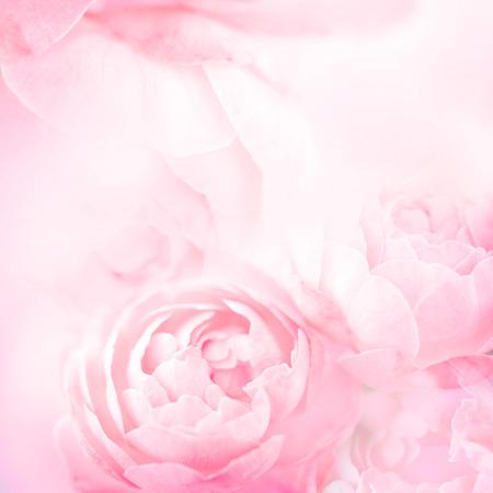 bonbon rose fleurs rose pour l'amour romantique fond Banque d'images