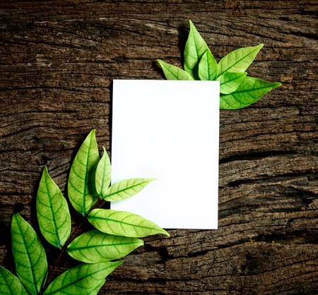 garden frame: The White blank paper sheet with fresh spring  green leafs border frame on wooden background , eco natural banner concept Stock Photo