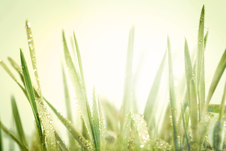 fresh green grass with droplets after the rain background