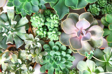 多肉植物やサボテン多肉植物、オーバーヘッドや平面図の配置 写真素材