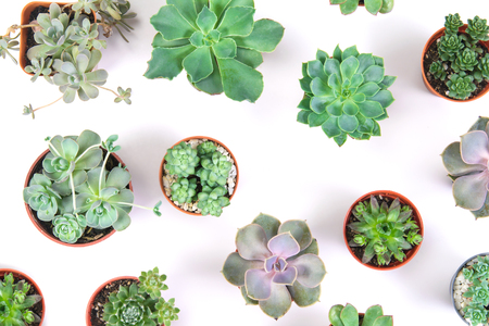 pattern of mixed succulents plant in pot on white background , overhead or top view Banco de Imagens