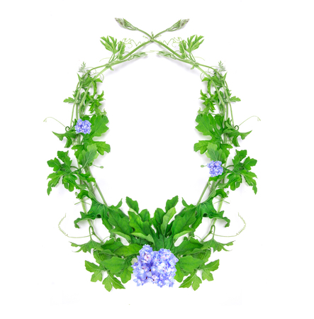 creeping plant: the green creeping plant leaf with blue flower arrangement as frame border on white background