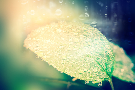 falling down: the rain falling down with droplet on leaf , fresh moment Stock Photo