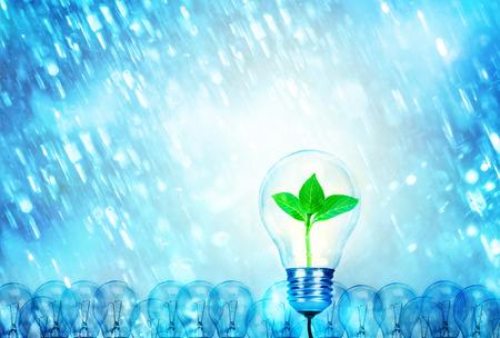 Opmerkelijk creatief idee voor milieuvriendelijk achtergrondconcept. Natuur Boom blad binnen een gloeilamp gloeien tussen een groep gloeilampen en zware regenval
