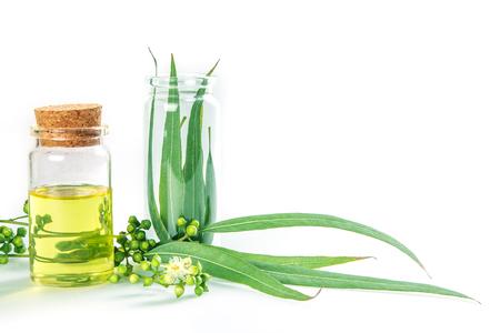 Eucalyptus etherische oliën in glazen fles, enanic kruiden aromatherapie concept