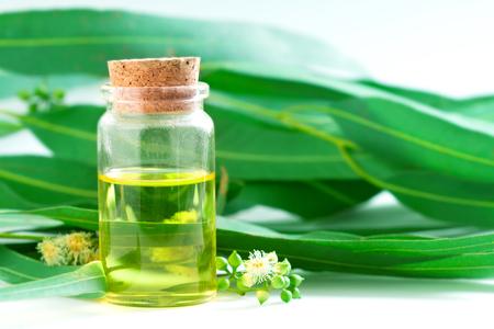 Huiles essentielles d'eucalyptus en bouteille en verre, concept d'aromathérapie à base de plantes oganiques Banque d'images - 74653089