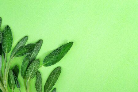Close up fresh green sage herb leaf on green background