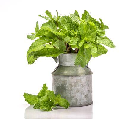 fresh organic mint leaf on white background