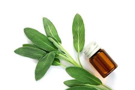 Close up fresh green sage herb leaf with bottle of essential oil on white background, herb essence concept