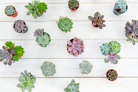 overhead shot of many succulents flower plant in pot on white wooden table , gardening minimal concept