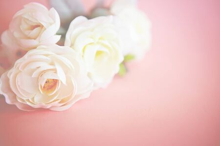 lovely rose flower on vintage retro pastel pink background , sweet and romatic moment