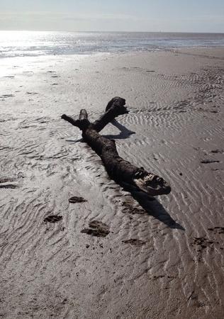 driftwood: Driftwood on beach
