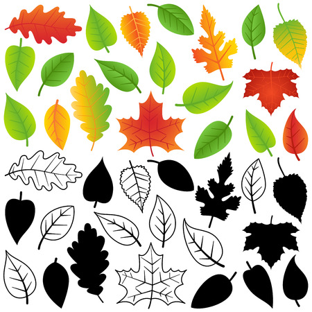 Vector Collection of Green, Autumn, Silhouettes and Outline Leaves Vector