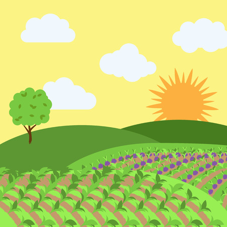 cultivated land: Vector Farm Themed Background