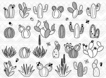 prickly fruit: Set of Doodle Cactus and Succulent Plants