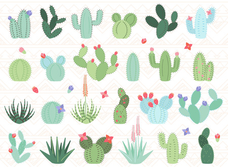 Set of Cactus and Succulent Plants Ilustrace