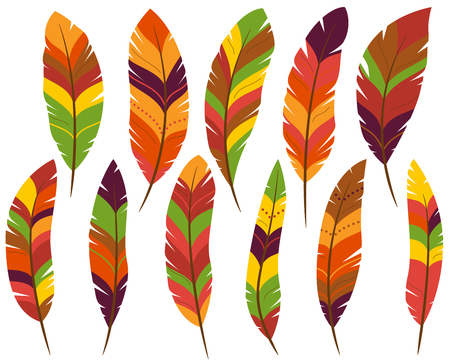 turkey feather: Thanksgiving or Fall Colored Feathers Illustration