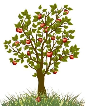 apple trees: apple tree Illustration
