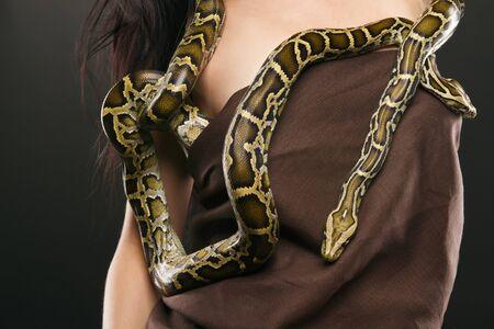 pythons Stock Photo - 14708605