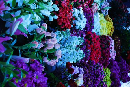Colourful Flowers Stock Photo