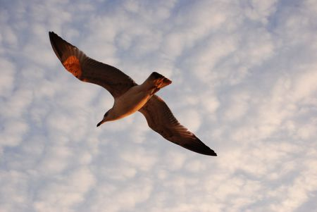 A seagull flying in the istanbul sky Stock Photo