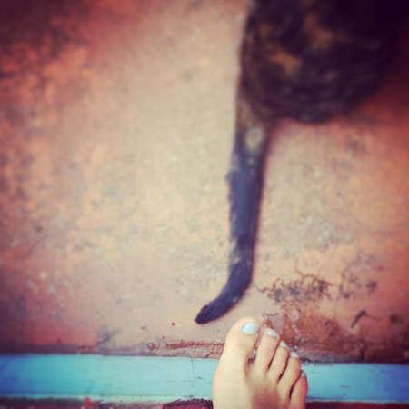 companionship: gato compa�ero