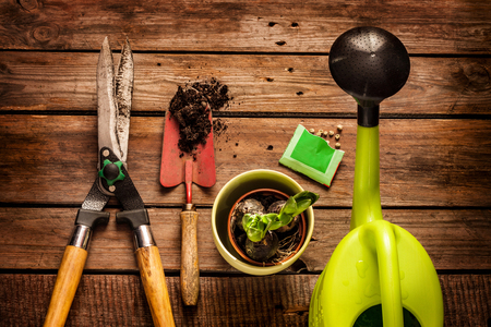 Gardening tools, watering can, seeds, plants and soil on vintage wooden table. Spring in the garden concept.