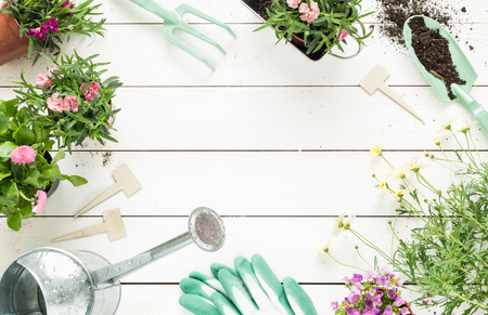 Gardening tools, flowers in pots and watering can on white wooden table. Spring in the garden concept background with free text space (top view, flat lay). 版權商用圖片 - 57696266