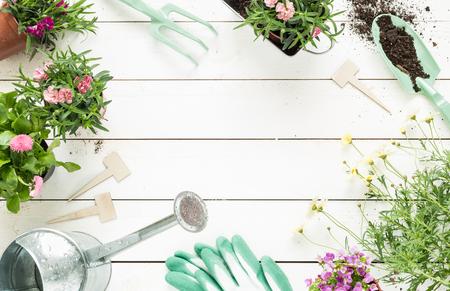 Tuingereedschap, bloemen in potten en gieter op witte houten tafel. Lente in de tuin concept achtergrond met vrije tekst ruimte (bovenaanzicht, plat). Stockfoto