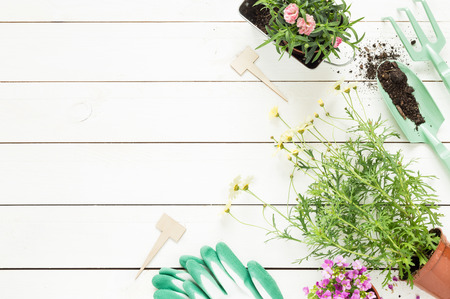 Gardening tools and flowers in pots on white wooden table. Spring in the garden concept background with free text space (top view, flat lay).