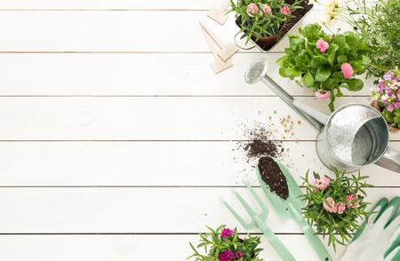 園芸工具、ポットとじょうろホワイト木製テーブルの上の花。フリー テキスト スペース (トップ ビュー フラット レイアウト) と庭コンセプト背景