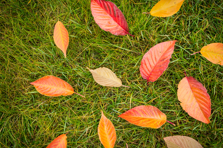Colorful autumn leaves on green grass (lawn) background captured from above (top view). Fall in the garden - flat lay composition. Stock Photo