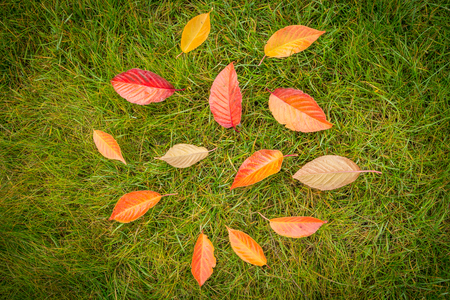 Colorful autumn leaves on green grass (lawn) background captured from above (top view). Fall in the garden - flat lay composition. 版權商用圖片