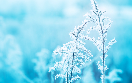 Frozen winter meadow close up. Cold weather, nature details covered with frost. Background layout with free text space.