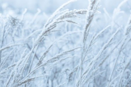 Frozen winter meadow - blurred background. Cold weather scenery.