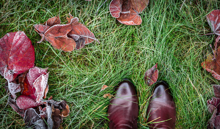 Shoes and colorful autumn leaves covered with frost on green grass (lawn). Background layout captured from above (top view). Winter or fall in the garden - flat lay composition.