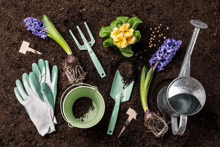 Gardening tools, hyacinth flowers and watering can on soil background. Spring garden works concept. Layout captured from above (top view, flat lay).