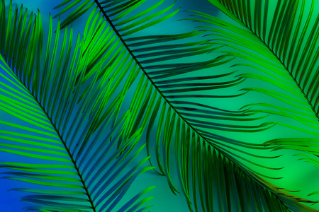 Tropical summer background - colorful (blue, green) exotic leaves.
